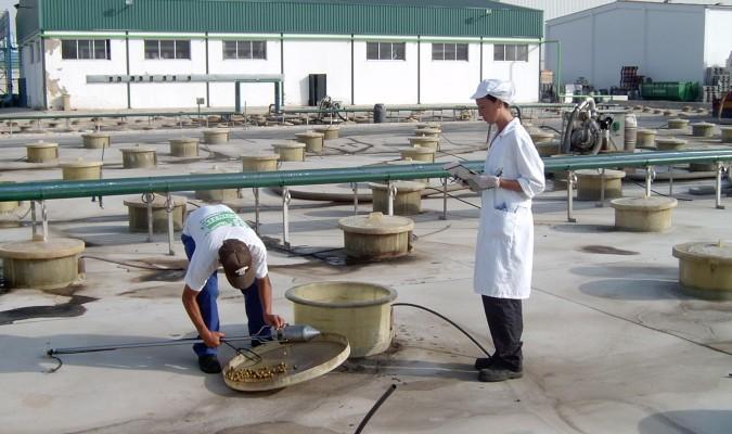 Empleados en la planta de Dcoop en el municipio de Dos Hermanas. / El Correo