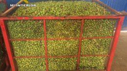 Un depósito con parte de los 16.885 kilos de aceitunas incautados por la Guardia Civil - ABC